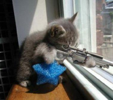 cat-firing-warning-shotpng2.jpg