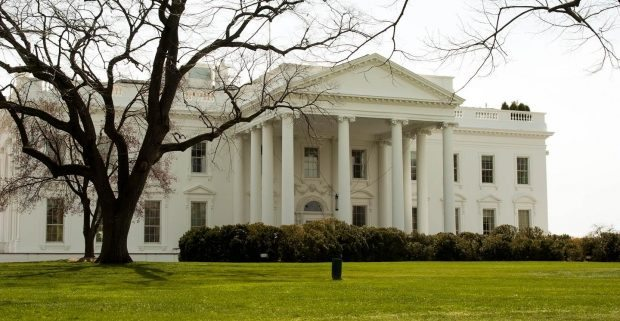 Grasshoppers and trained monkeys: our wacky government